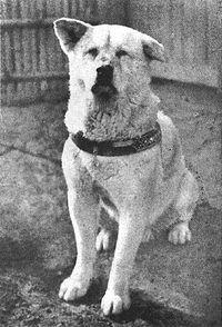 """""""Podróże z pasją"""" – HACHIKO- przykład psiej wierności"""